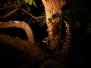 Monzo leopard