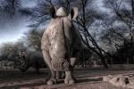 Himba art22