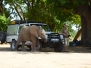 Elephant in Mana Pools