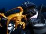 Kelp diving II