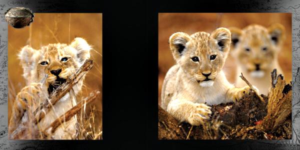 Hic sunt leones.qxd