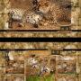 set-na-vykresy-a3-gepardi-smecka