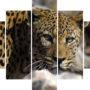 Big leopard LE 2957 – vzor 1