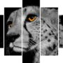 Cheetah 2667 – BW – orange eye – vzor