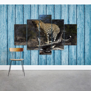 Leopard male - LE 2792 - natural colors - vzor 2