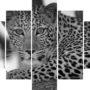 Levhart 4189 – BW – vzor (1)
