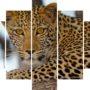 Levhart 4189 – nature – vzor