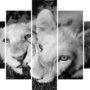 Lion 6672 – BW eye – vzor 1