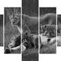 Lions family L 9269 – BW – vzor